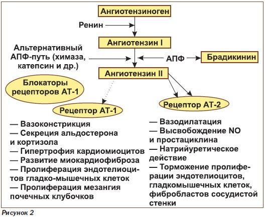 Механизм действия сартанов