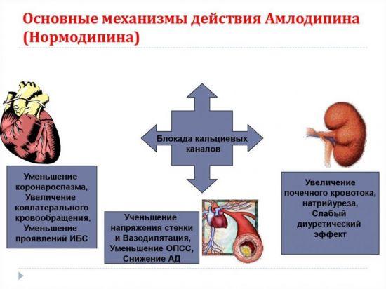 Механизм действия амлодипина